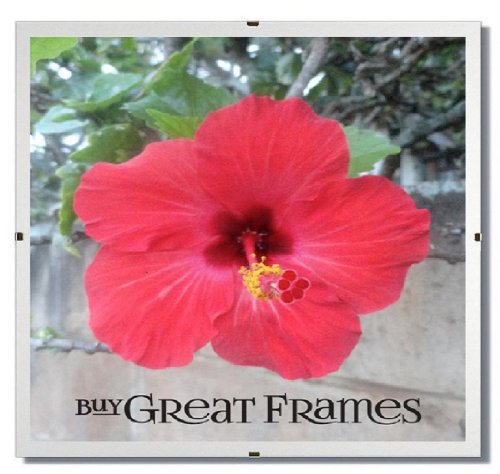 Set of 12 - GREATCLIP 10x10 Glass and Clip Frames