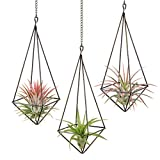 Dahey 3 Pcs Hanging Air Plant Holder Himmeli Geometric Planter Metal Airplant Rack Tillandsia Hanger with Chain in Modern Rustic Art Style for Home Decor Bronze