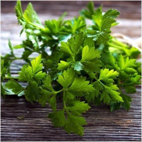Paquet de 600 graines, feuilles plat italien persil Semences (Petroselinum crispum)