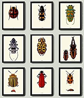 Beetle Print SET of 9 Art Print Antique Beetles Red Ladybug Green yellow Polka Dot Stripe Insect Natural Science Illustration Garden Forest Nature Home Decor Interior Design to Frame