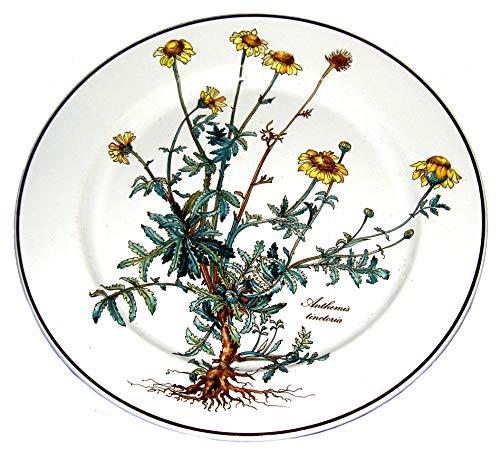 Villeroy & Boch Botanica Speiseteller 24cm