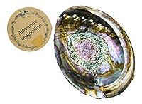 Alternative Imagination Abalone Shell