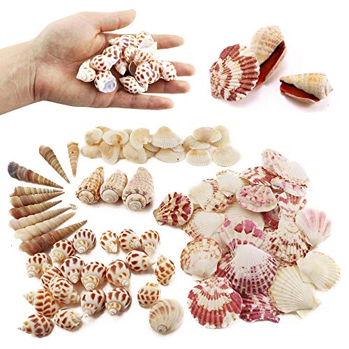Weoxpr 200pcs Sea Shells Mixed Ocean Beach Seashells, Various Sizes Natural Seashells