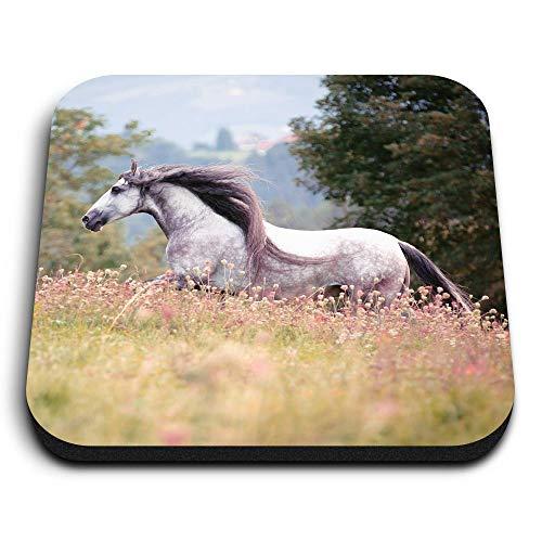 Destination Vinyl ltd Impresionantes imanes cuadrados MDF – Puro caballo español andaluz para oficina, armario y pizarra blanca, pegatinas magnéticas 12473