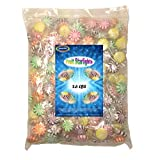 Assorted Fruit Starlights, 2.6 Lbs Individually Wrapped Hard Candy