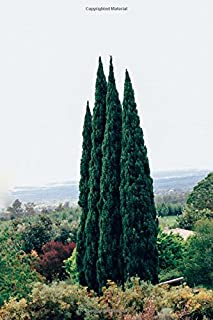 Beautiful Tall Thin Italian Cypress Evergreen Trees Journal: 150 Page Lined Notebook/Diary