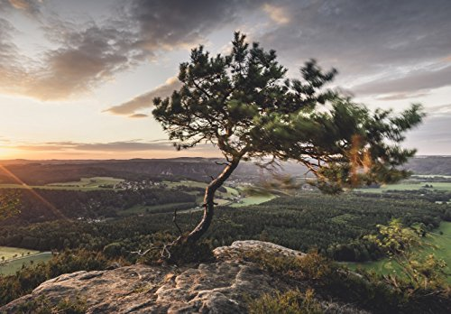 XXL Poster 100 x 70cm (S-850) Kiefer auf Berg vom Wind gebeugt Baum auf Gipfel (Lieferung gerollt!)