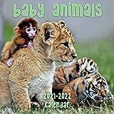 Baby Animals 2021 - 2022 Calendar: 18 Months Book Calendar 8.5x8.5inch