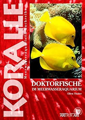 Doktorfische im Meerwasseraquarium (Koralle)