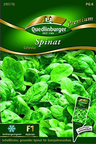 Spinat Celesta - Spinacia oleracea QLB Premium Saatgut Spinat und MangoldSpinat und Mangold