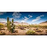 AWERT Fondo de terrario de 91 x 41 cm azul cielo desierto oasis cactus reptil hábitat fondo de vinilo duradero (no adhesivo)