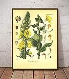 YOULIYOULA Vintage botanique Imprime Pavot Velours Plante Affiche Mur Art Toile Peinture Plantes médicinales encyclopédie Affiches décor à la maison-40X60cm sans Cadre
