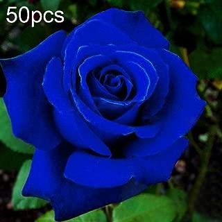GMNP0di% Blue Rose Seeds for Planting Ornamental Plants Flower Seeds for Garden Bonsai Office Home Floral Decor