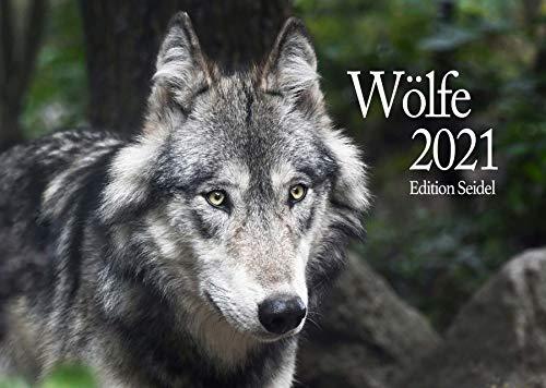 Edition Seidel Wölfe Premium Kalender 2021 DIN A3 Wandkalender Tiere Wald Natur