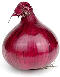 Red Grano Onions Seeds, 300+ Premium Heirloom Seeds, Lowest Price for Highest Quality! Fantastic Addition to Your Home Garden!, (Isla's Garden Seeds), Non GMO Organic, 90% Germination Rates!