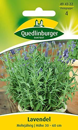 Lavendel Quedlinburger Saatgut Samen 494322