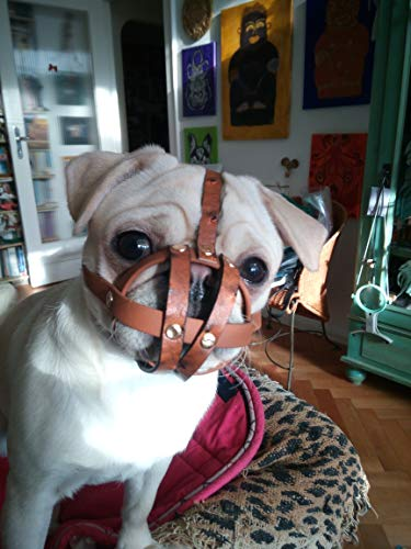 DoggyStyle by Chloe Bulldog% Mops Muzzle Color Muzzle