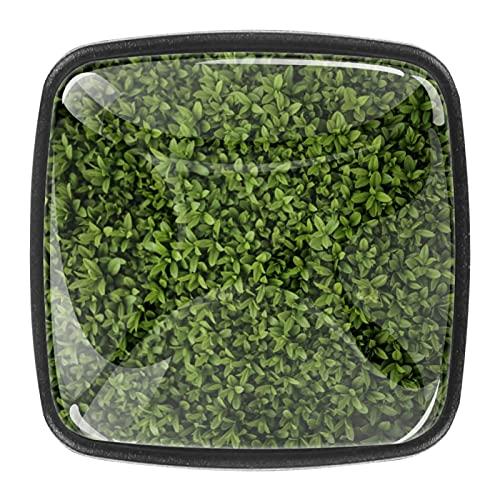 (4 PCs) Packs Kitchen Cabinet Knobs Cupboard Handles Door Knobs Dresser Drawer Handles Knobs for Dresser Drawers Close Up Green Bush 35mm