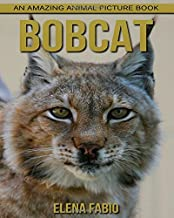 Children's Book: An Amazing Animal Picture Book about Bobcat for Kids