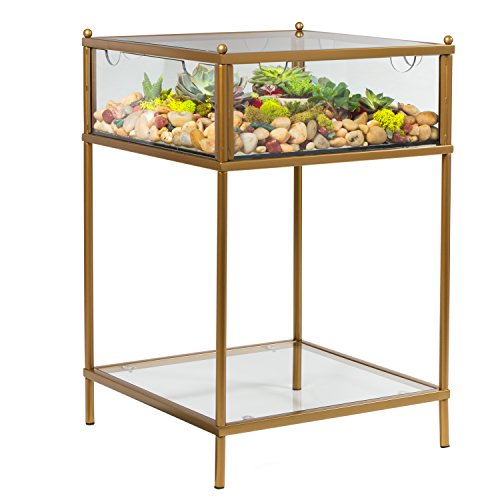 Terrarium Display End Table with Reinforced Glass in Gold Iron - Great