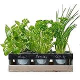 ✓ COSI FACILE – Potete iniziare subito a coltivare il vostro giardino di erbe aromatiche, e vi assicuriamo che non è necessario avere esperienza di giardinaggio! ✓ COMODO – Questo kit contiene tutto ciò che vi serve per avviare il vostro giardino di ...
