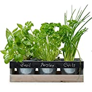 Viridescent Indoor Herb Garden Kit