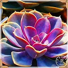 Clearance Sale - Big 100pcs/pack 99 Kinds to Choose Succulents Garden Lithops Flores Pseudotruncatella Office Bonsai Plants,#u9nu79(Seed) - by Abuldahi