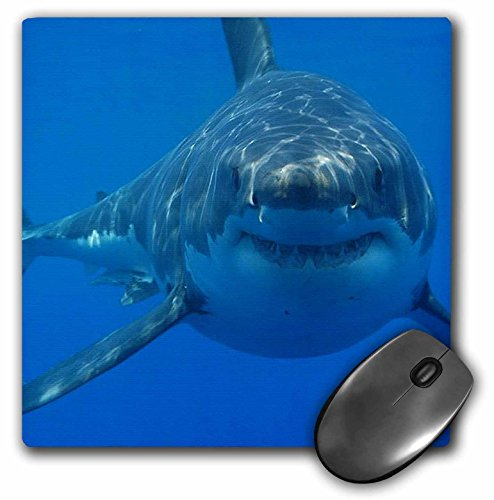 3dRose LLC 8 x 8 x 0.25 Inches Mouse Pad, Underwater Great White Shark Smiling Shark (mp_108355_1)