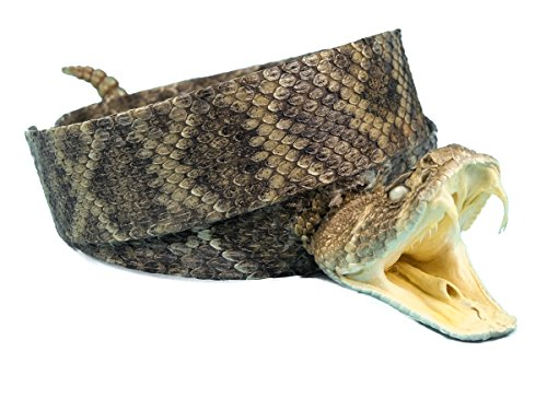 1.25' Rattlesnake Hat Band with Head & Rattle (598-HB204)