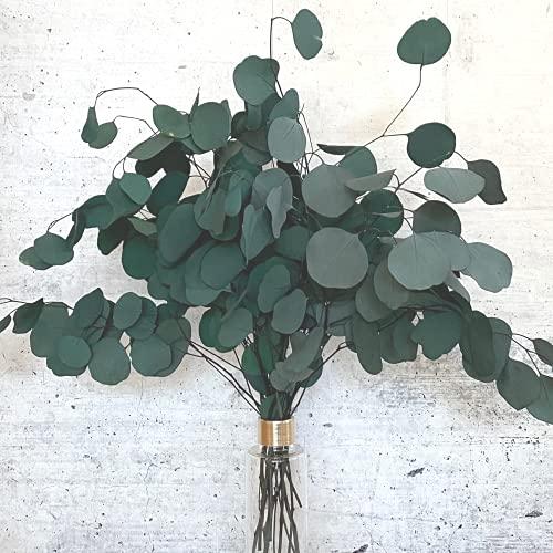 Eukalyptus getrocknet grün Trockenblumen Eucalyptus trocken I Tischdeko I Dekozweige für Trockenblumenstrauß I echte Dekoblumen I getrocknete Blumen I Eukalyptus Deko I deutsche Trockenblumen-Marke