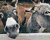 Pintura digital animal burro lienzo kit de pintura al óleo para adultos para principiantes, completo con pincel y pintura acrílica