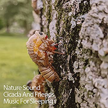 Nature Sound Cicada And Friends Music For Sleeping