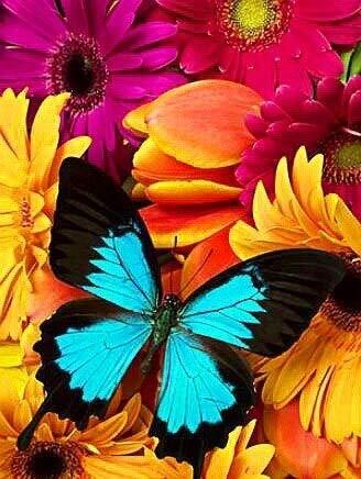 5D mosaico de diamantes mariposa bordado de diamantes jardinero Kit de bordado de imagen de diamantes de imitación paisaje pintura de diamantes A5 60x80cm