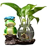 DECORACION FHW Creativa Agua Verde Planta de hidroponía de Agua Flor de Vidrio Florero Florero Contenedor Transparente Púrpura Sandware