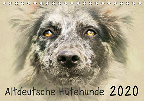 Altdeutsche Hütehunde 2020 (Tischkalender 2020 DIN A5 quer)