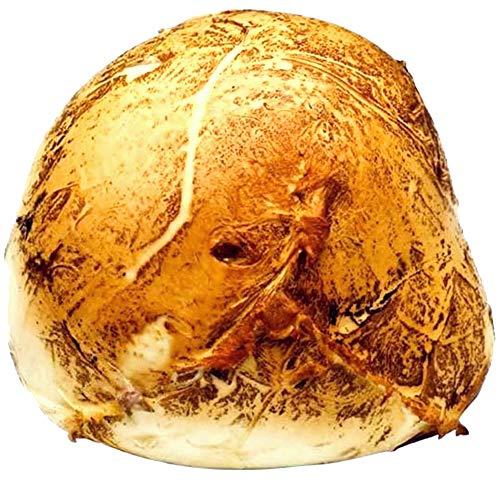 Mozzarella Affumicata Bufala Campana Dop|Provola di Paestum|Latte di Bufala|Alta Digeribilità|Ordine Minimo 1Kg|Pezzatura 250g o 500g|Consegna 24/36 Ore|Dettaglio Spedizioni nelle Descrizioni