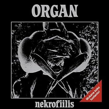 Nekrofiilis