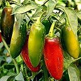 SEEDVALLEY Pimiento jalapeño M - Vegetable Seeds