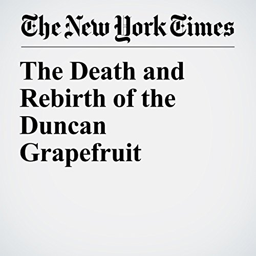 The Death and Rebirth of the Duncan Grapefruit audiobook cover art