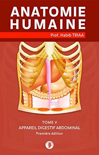 Anatomie de l'appareil digestif abdominal