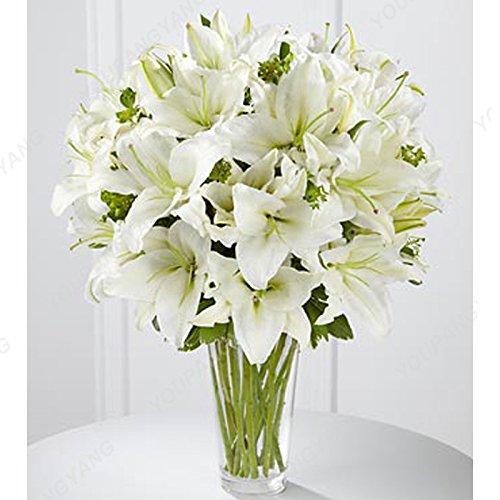 100 pcs Bonsai Lily Graines d'intérieur Plantes vivaces Lily Flower Seed Pure White Accueil Jardin Fleurs Plantes SEMENTES Livraison gratuite rouge
