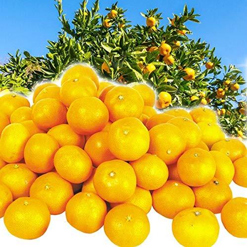 国華園 食品 広島産 大長みかん 10�s1箱 柑橘