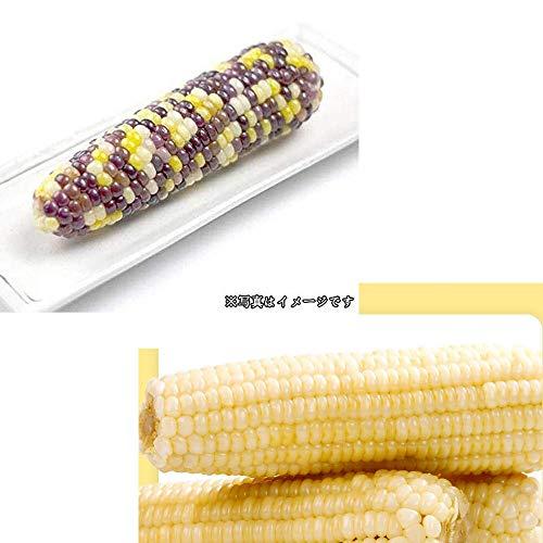 冷凍糯玉米棒 白糯玉米(2本入)&紫糯玉米(2本入)軸付き蒸しとうもろこし 組み合わせ セット