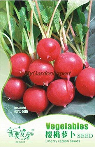 Vente chaude 60pcs Cerise Radis semences, des semences de légumes, Mini Radis semences, Bonsai Plante en pot jardin Livraison gratuite