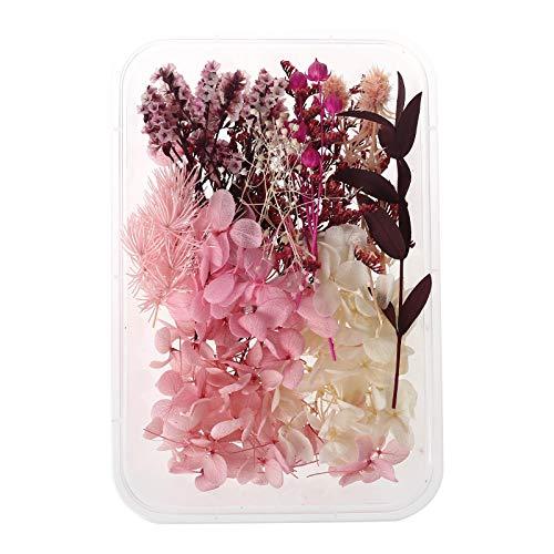 geneic 1 Box echte Mischung getrocknete Blumen für Aromatherapie Kerze Harz Schmuck Trockenpflanzen gepresste Blumen Basteln DIY Zubehör