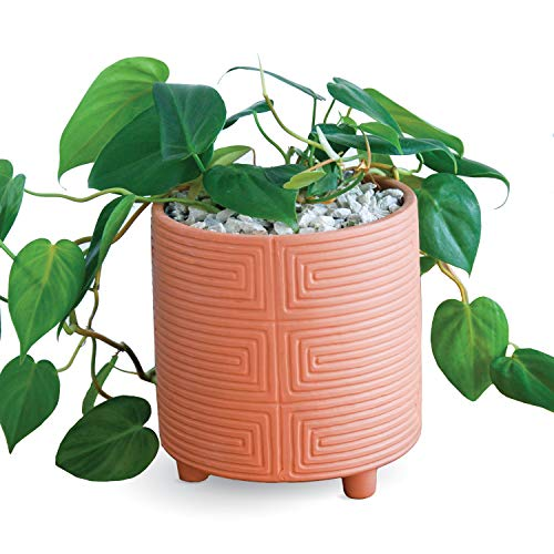 Carlton Lane Terracotta Pot Look – 6-Inch Clay Plant Pot with Drainage Holes in Terra Cotta Style with Modern Design – Succulent and Cactus Nursery Planter for Home, Office, Café – Terracotta Colored