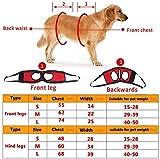 Zoom IMG-2 filfeel cablaggio per cani pet