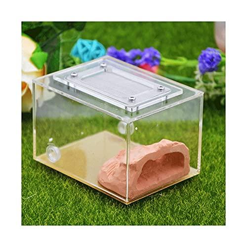 XBSXP Ant Farm Formicarium Ant Nest para observar Hormigas vivas Hábitat de Yeso Acrílico Transparente Hormigas Castillo Casa/Vivienda para Alimentar Hormigas (Color: Rojo, Tamaño: 10x