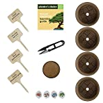 Bonsai Starter Kit - The Complete Growing Kit to Easily Grow 4 Bonsai Trees from Seed + Comprehensive Guide & Bamboo… 9 Everything needed to grow 4 beautiful bonsai trees - in one sleek box: Contains 4 types of seeds (Rocky Mountain Bristlecone Pine, Black Poui, Norway Spruce, and Flame Tree) stored in seed-safe vials for better germination, 4 biodegradable growing pots, 1 expanding-soil disc, 4 bamboo plant markers, 1 bonsai clipper and a beautiful, comprehensive and simple instruction booklet. #1 growth performance: Our rating speaks for itself! Planter's Choice is the only brand that stores the seeds in our seed-safe vials to ensure proper germination. The perfect diy gift: For mom, dad, him or her, this is the perfect gift to give on birthdays, anniversaries, holidays, housewarming, or any other occasion — ideal for beginners, masters, and children alike. See the excitement in their eyes as they experience growing indoor bonsai trees.