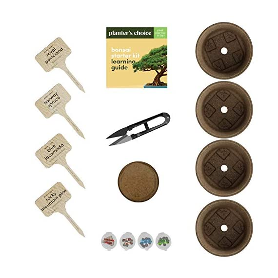 Bonsai Starter Kit - The Complete Growing Kit to Easily Grow 4 Bonsai Trees from Seed + Comprehensive Guide & Bamboo… 2 Everything needed to grow 4 beautiful bonsai trees - in one sleek box: Contains 4 types of seeds (Rocky Mountain Bristlecone Pine, Black Poui, Norway Spruce, and Flame Tree) stored in seed-safe vials for better germination, 4 biodegradable growing pots, 1 expanding-soil disc, 4 bamboo plant markers, 1 bonsai clipper and a beautiful, comprehensive and simple instruction booklet. #1 growth performance: Our rating speaks for itself! Planter's Choice is the only brand that stores the seeds in our seed-safe vials to ensure proper germination. The perfect diy gift: For mom, dad, him or her, this is the perfect gift to give on birthdays, anniversaries, holidays, housewarming, or any other occasion — ideal for beginners, masters, and children alike. See the excitement in their eyes as they experience growing indoor bonsai trees.